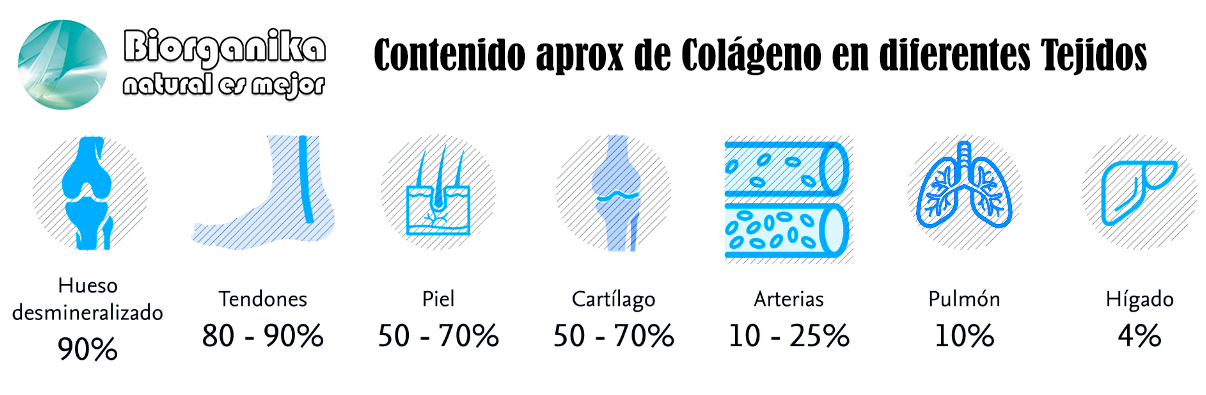 colageno tejidos 2